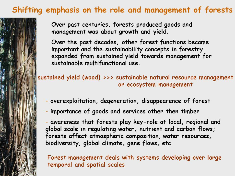 Shifting emphasis on the role and management of forests