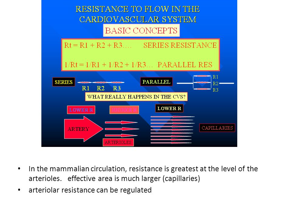 In the mammalian circulation, resistance is greatest at the level of the arterioles. effective area is much larger (capillaries)