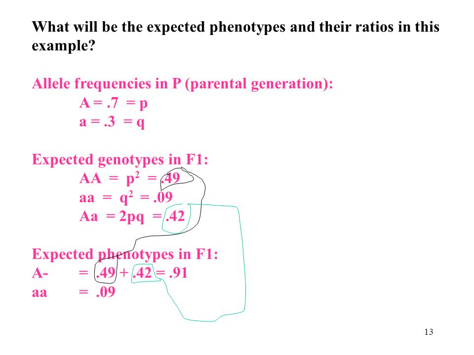 What will be the expected phenotypes and their ratios in this