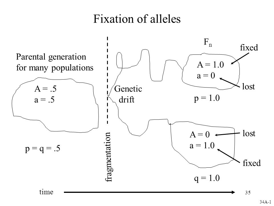 Fixation of alleles Fn fixed Parental generation for many populations