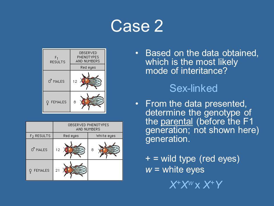 Case 2 Sex-linked X+Xw x X+Y