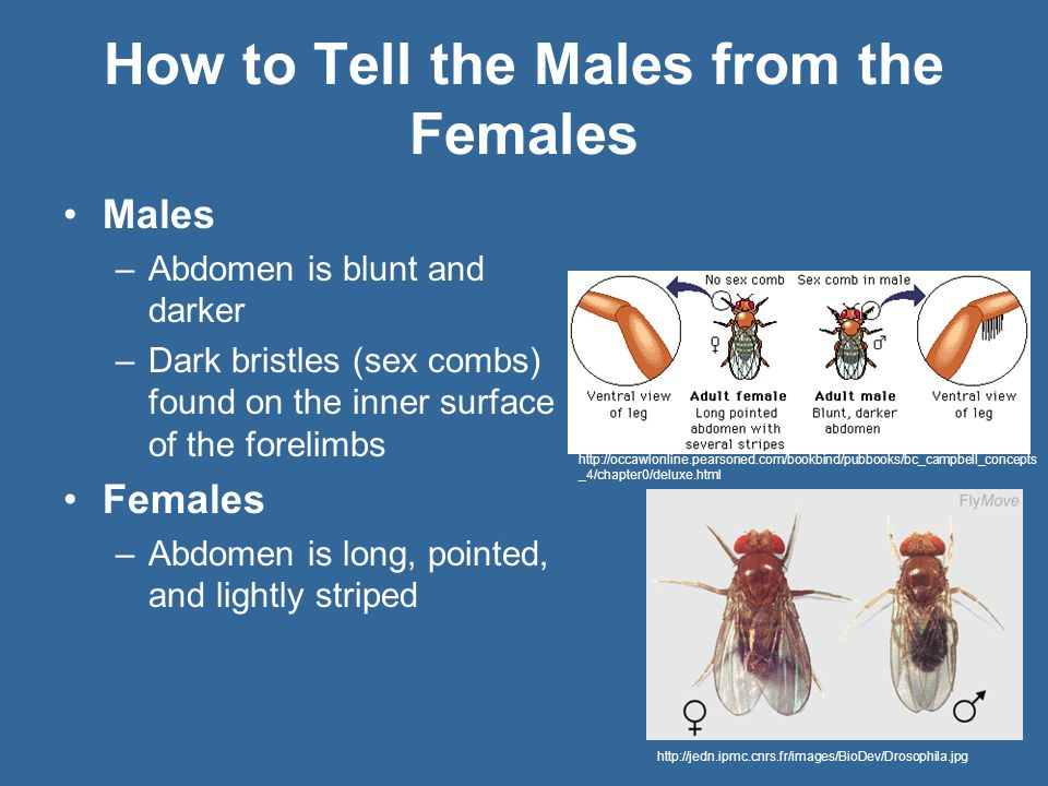 How to Tell the Males from the Females