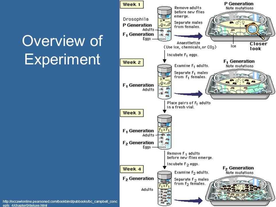 Overview of Experiment