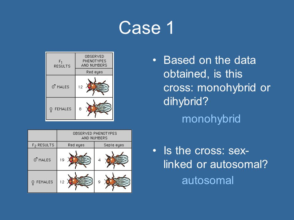 Case 1 Based on the data obtained, is this cross: monohybrid or dihybrid Is the cross: sex-linked or autosomal