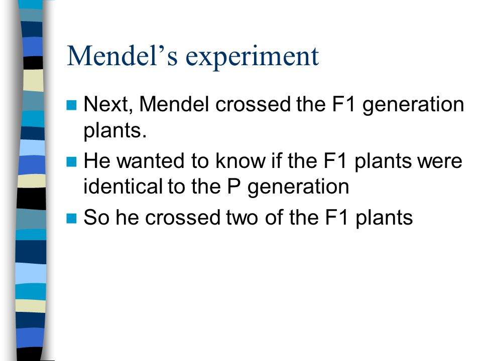 Mendel's experiment Next, Mendel crossed the F1 generation plants.
