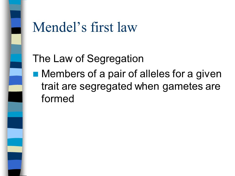Mendel's first law The Law of Segregation
