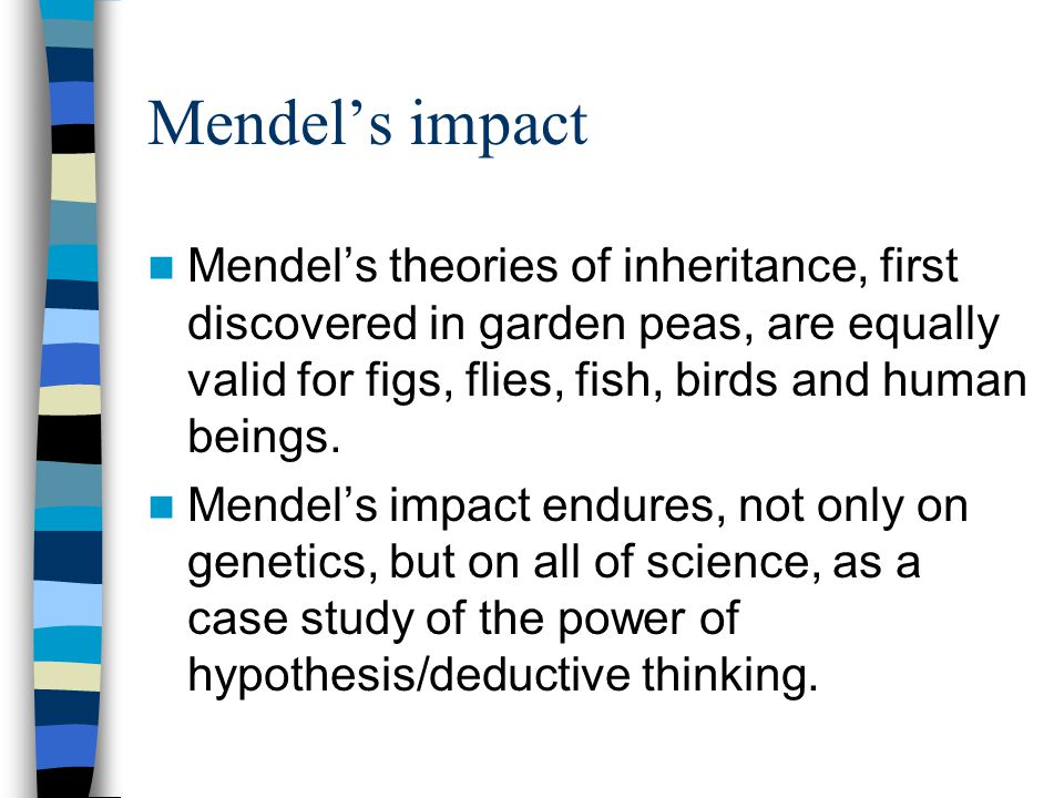 Mendel's impact Mendel's theories of inheritance, first discovered in garden peas, are equally valid for figs, flies, fish, birds and human beings.