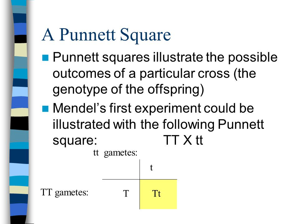 A Punnett Square Punnett squares illustrate the possible outcomes of a particular cross (the genotype of the offspring)