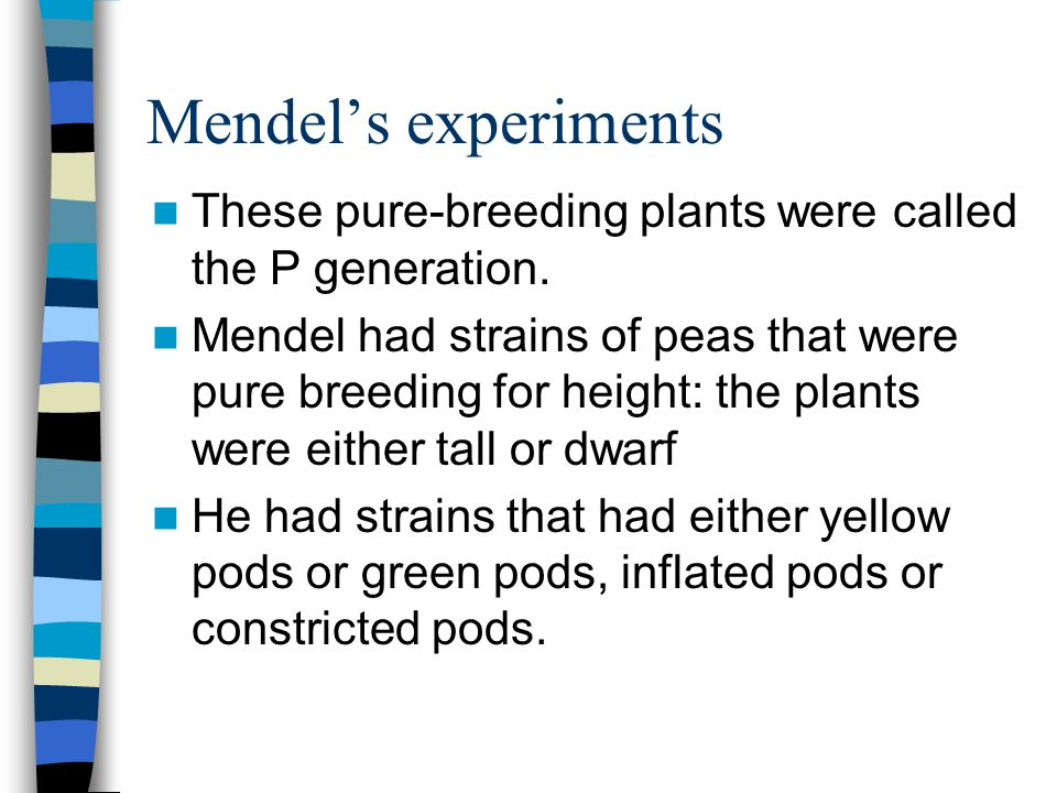Mendel's experiments These pure-breeding plants were called the P generation.