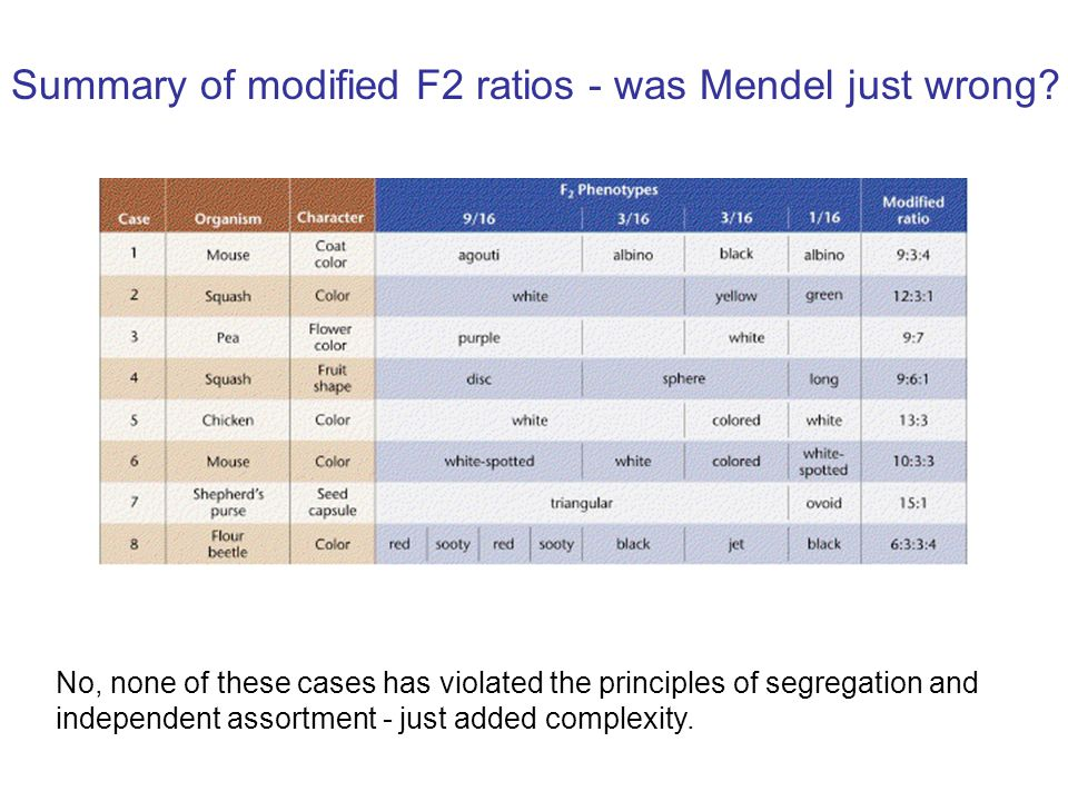 Summary of modified F2 ratios - was Mendel just wrong