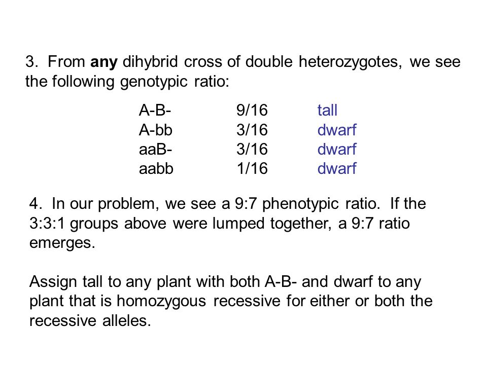 3. From any dihybrid cross of double heterozygotes, we see the following genotypic ratio: