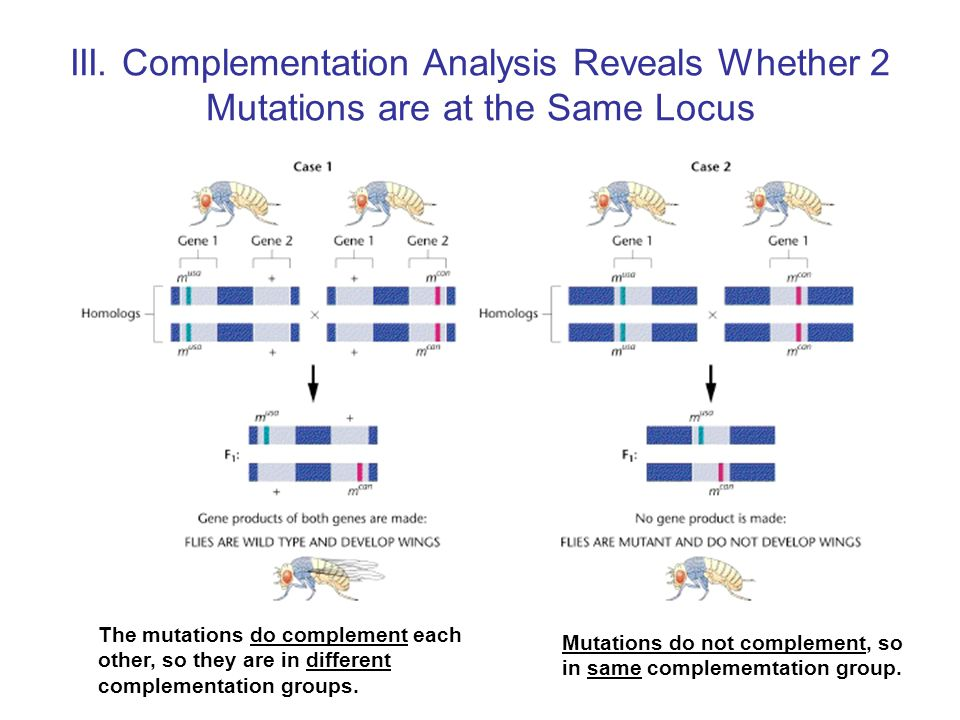 Mutations do not complement, so in same complememtation group.