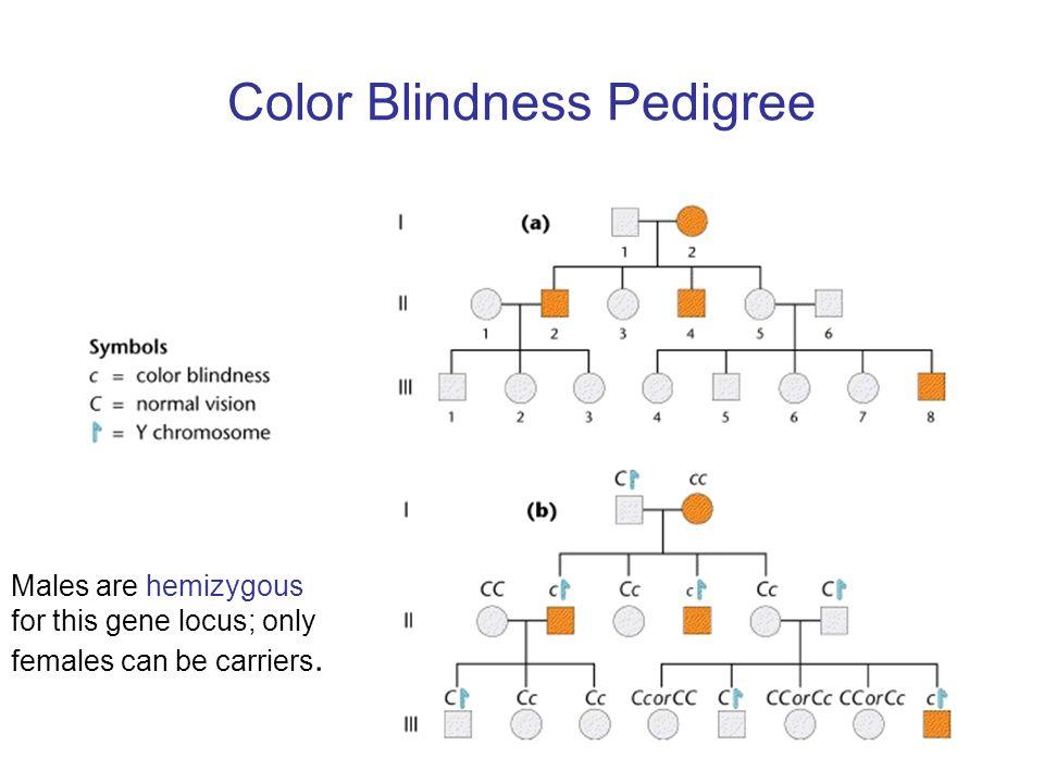 Color Blindness Pedigree