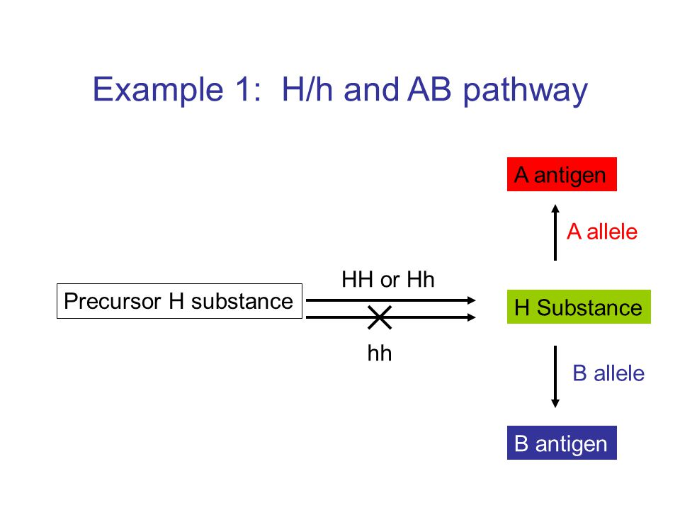 Example 1: H/h and AB pathway