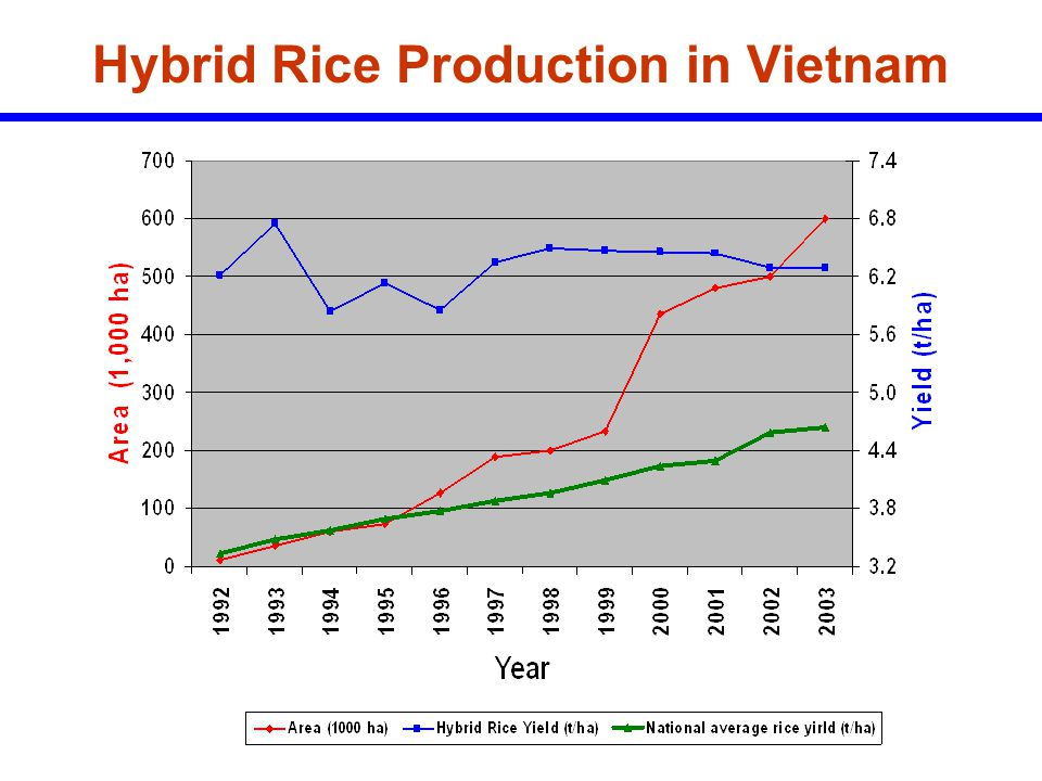 Hybrid Rice Production in Vietnam
