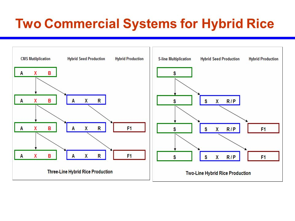 Two Commercial Systems for Hybrid Rice
