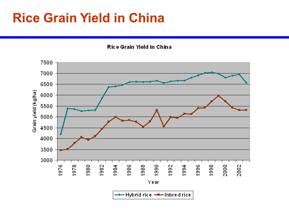 Rice Grain Yield in China