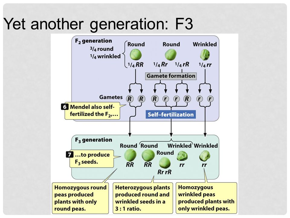 Yet another generation: F3