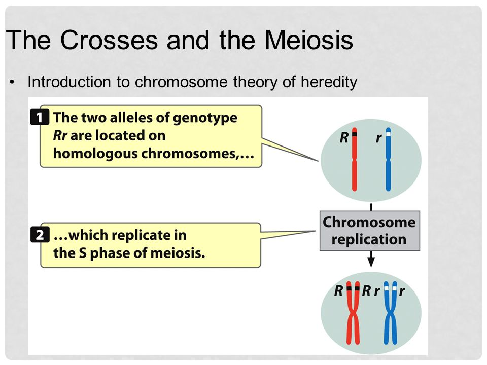 The Crosses and the Meiosis