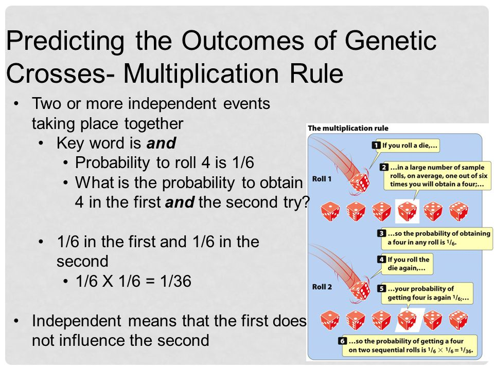 Predicting the Outcomes of Genetic Crosses- Multiplication Rule