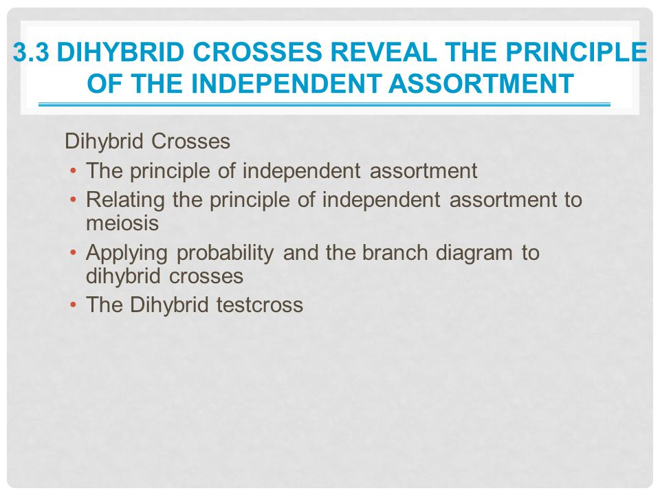 3.3 Dihybrid Crosses Reveal the Principle of the Independent Assortment