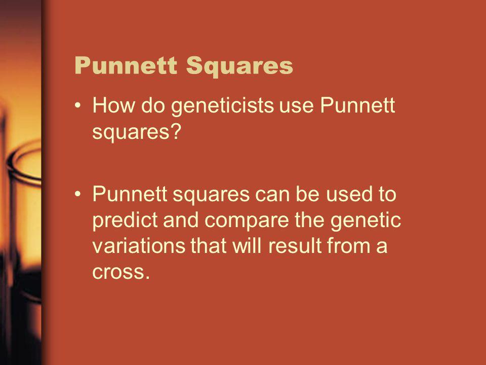 Punnett Squares How do geneticists use Punnett squares