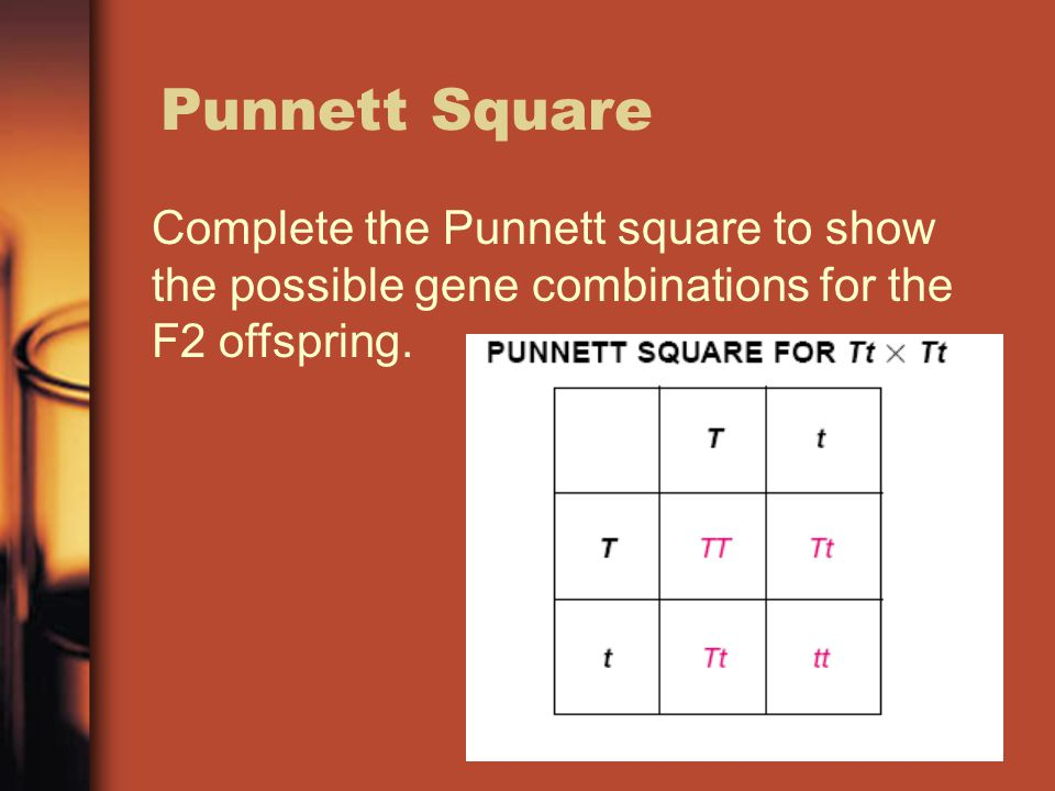 Punnett Square Complete the Punnett square to show the possible gene combinations for the F2 offspring.