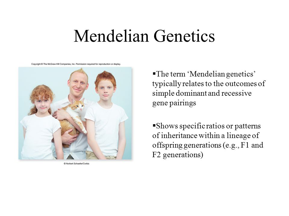 Mendelian Genetics The term 'Mendelian genetics' typically relates to the outcomes of simple dominant and recessive gene pairings.