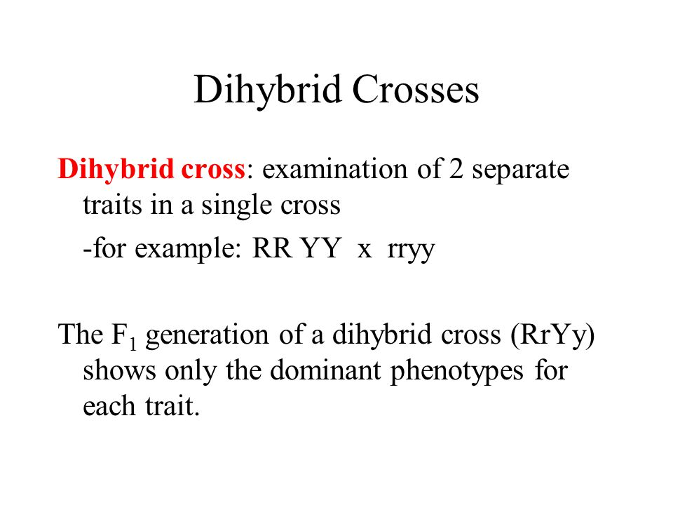 Dihybrid Crosses Dihybrid cross: examination of 2 separate traits in a single cross. -for example: RR YY x rryy.