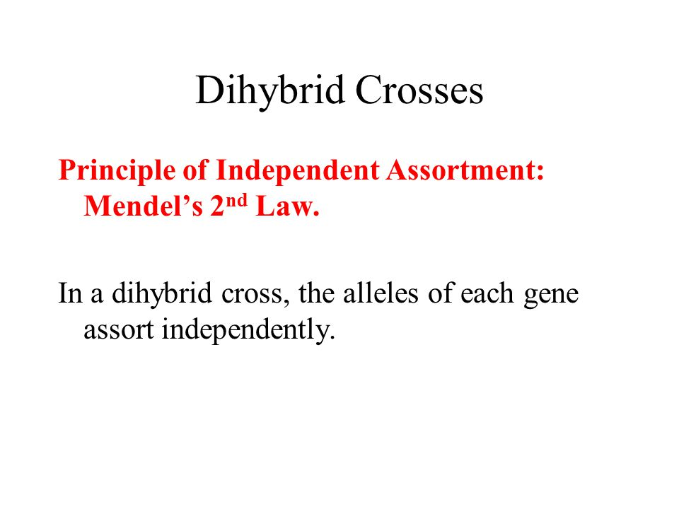 Dihybrid Crosses Principle of Independent Assortment: Mendel's 2nd Law.