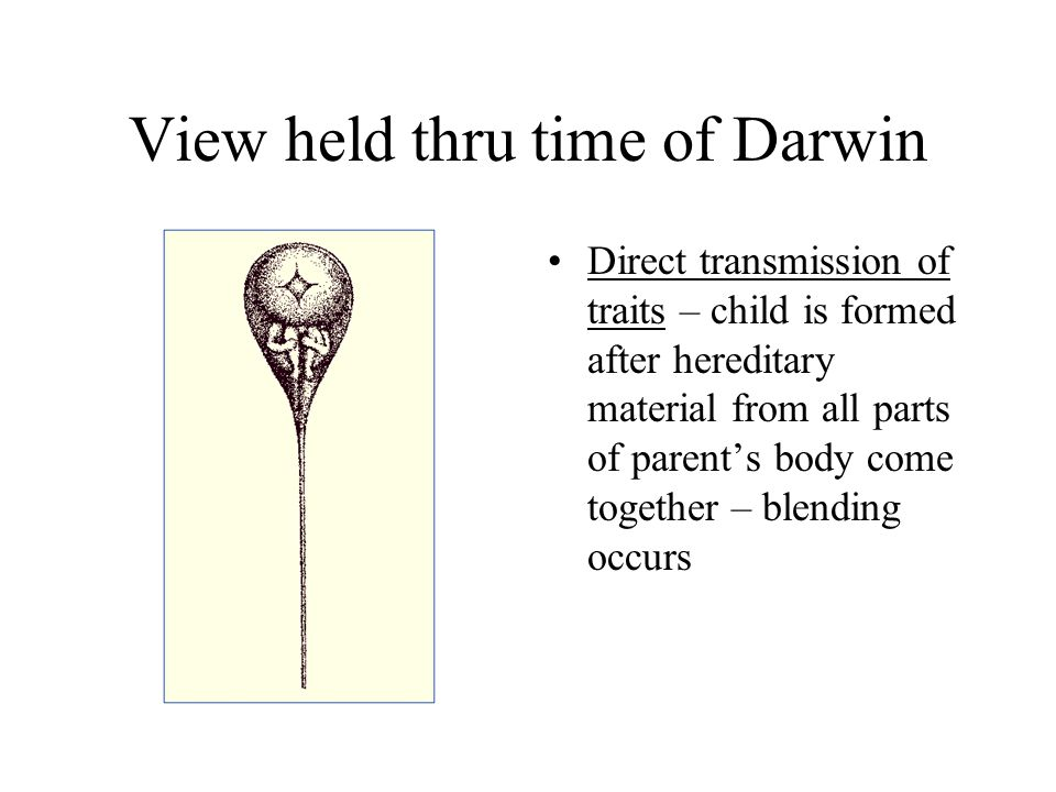 View held thru time of Darwin