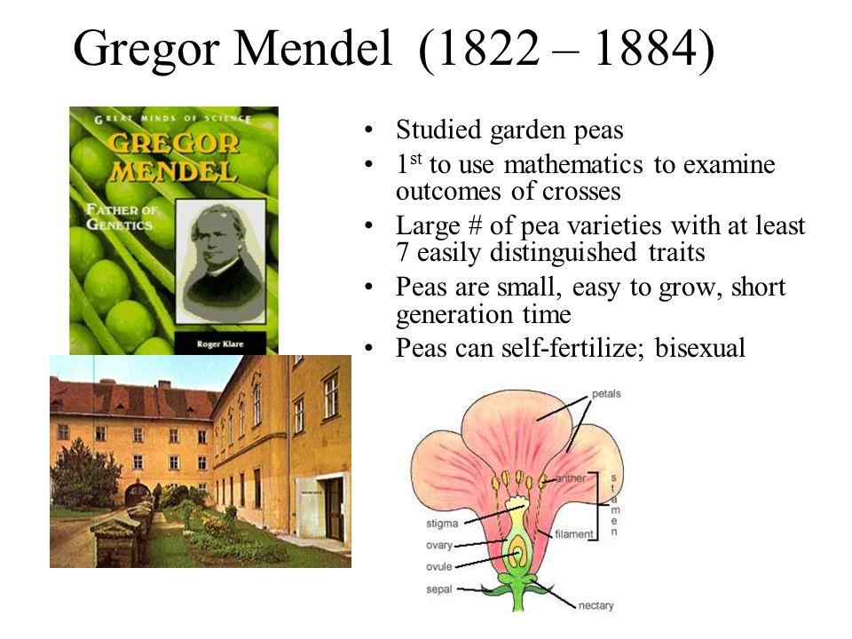 Gregor Mendel (1822 – 1884) Studied garden peas