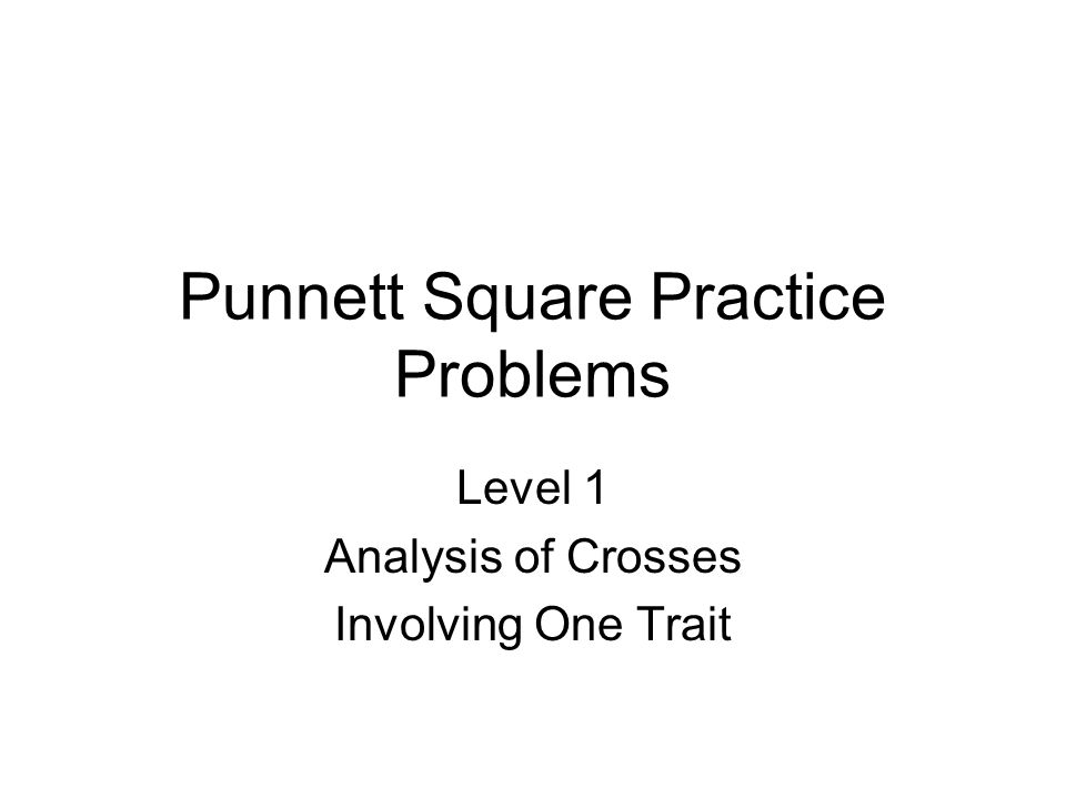 Punnett Square Practice Problems ppt video online download – Punnett Square Practice Problems Worksheet
