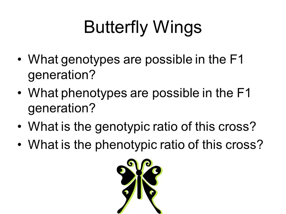 Butterfly Wings What genotypes are possible in the F1 generation