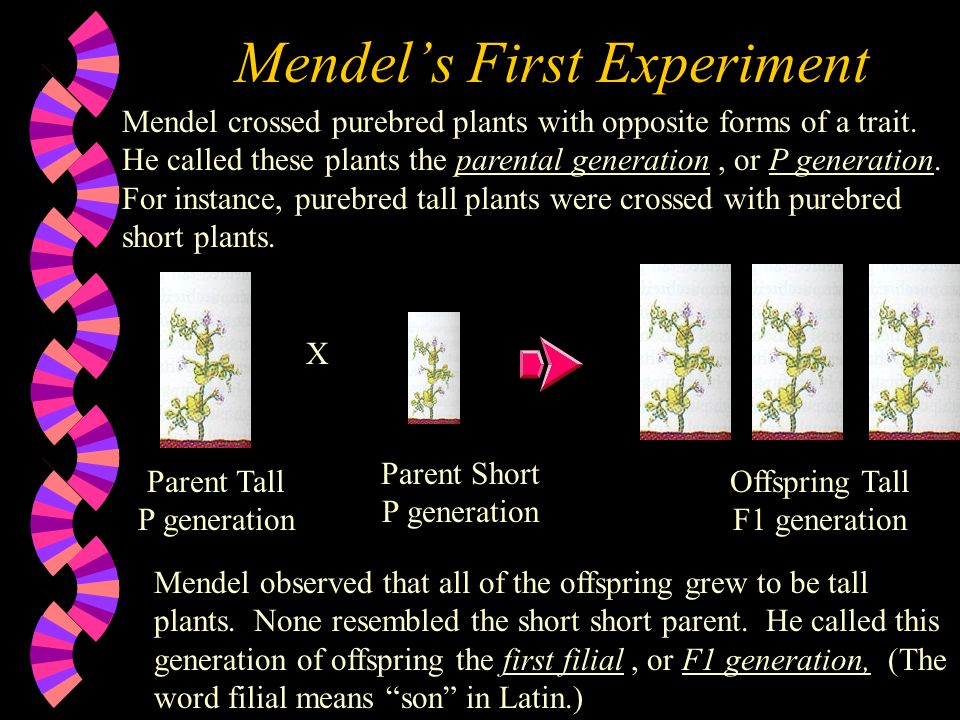 Mendel's First Experiment