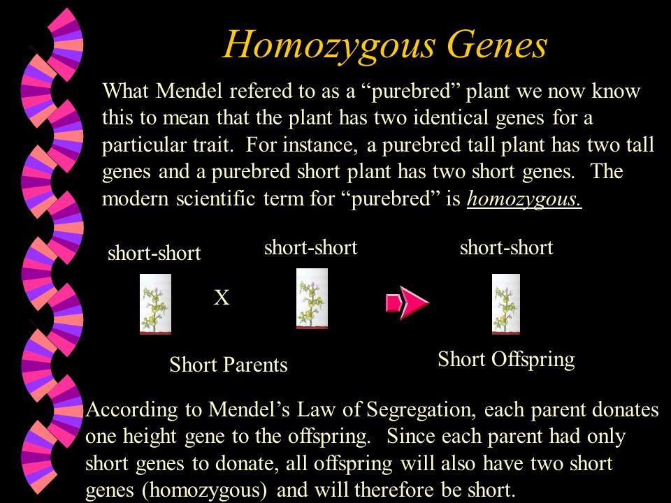 Homozygous Genes