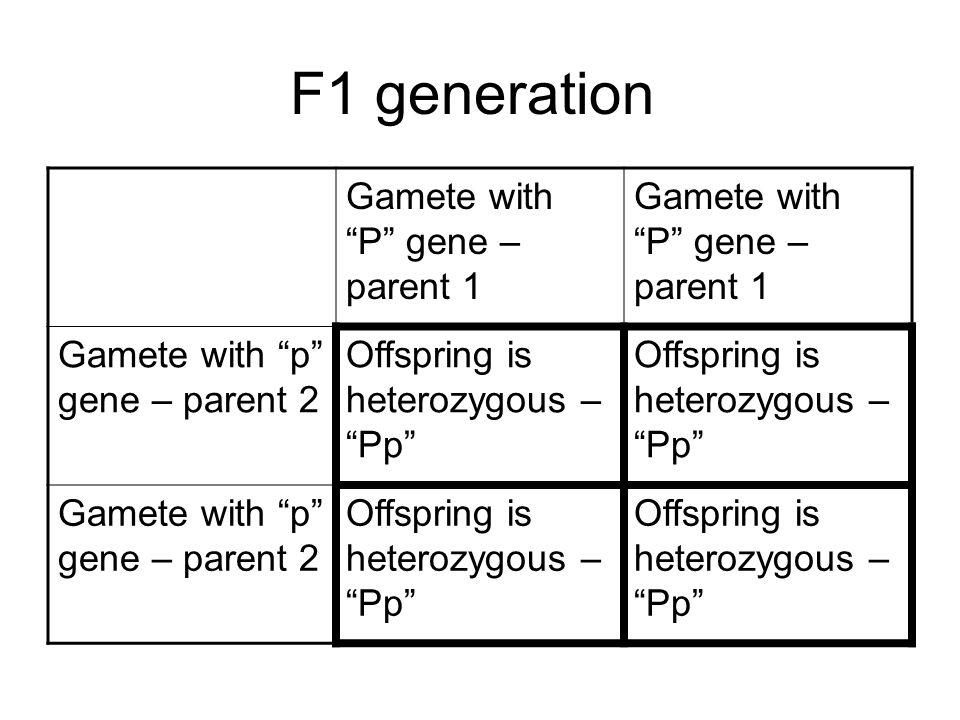 F1 generation Gamete with P gene – parent 1