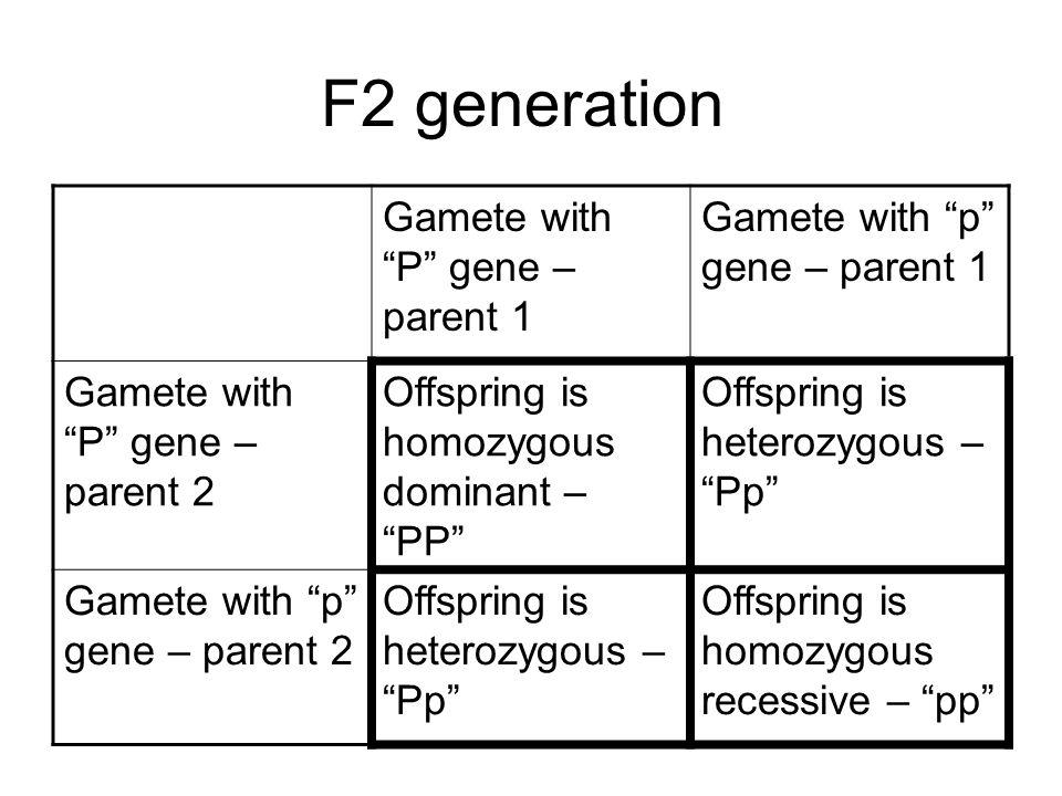 F2 generation Gamete with P gene – parent 1