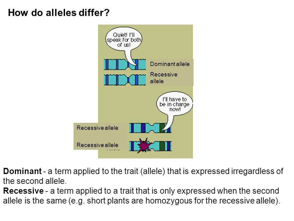 How do alleles differ Dominant allele. Recessive allele. Recessive allele.