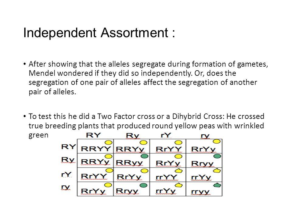 Independent Assortment :