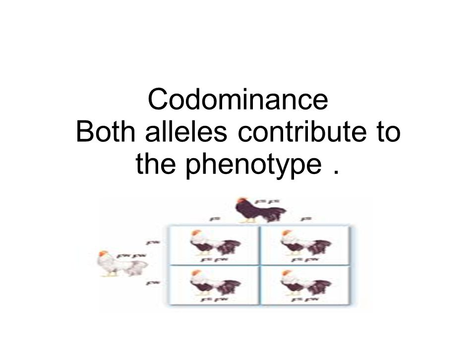 Codominance Both alleles contribute to the phenotype .