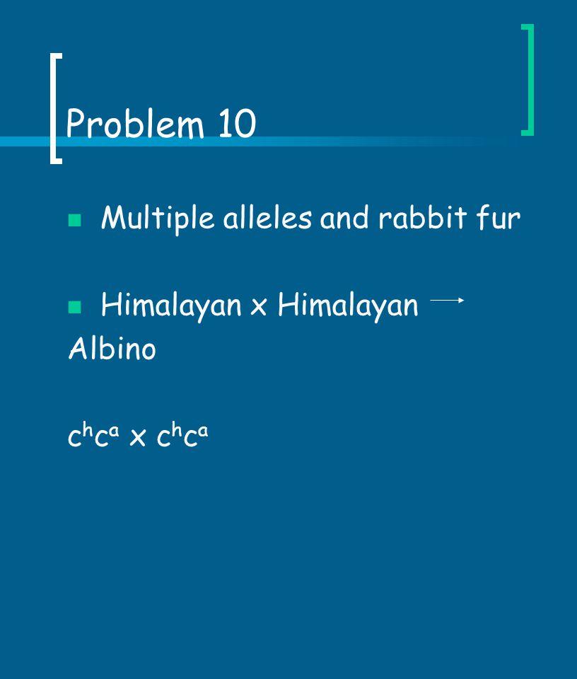 Problem 10 Multiple alleles and rabbit fur Himalayan x Himalayan
