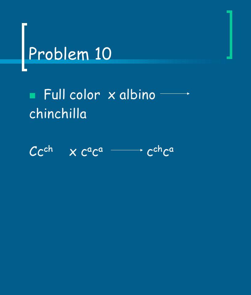 Problem 10 Full color x albino chinchilla Ccch x caca cchca