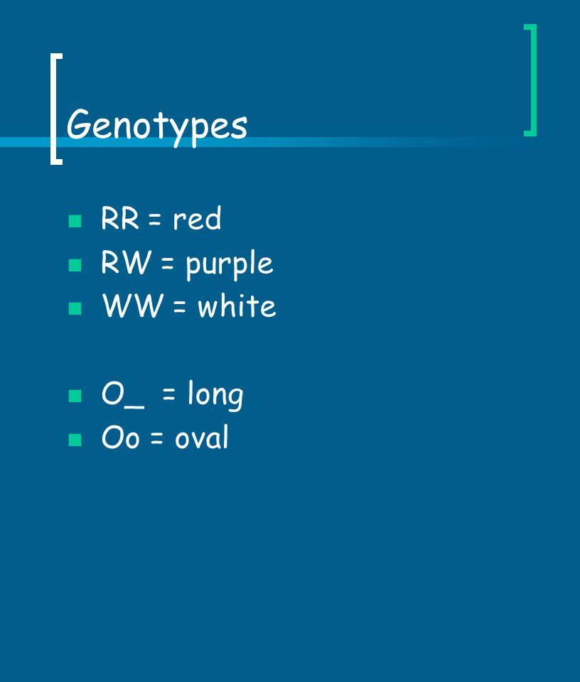 Genotypes RR = red RW = purple WW = white O_ = long Oo = oval