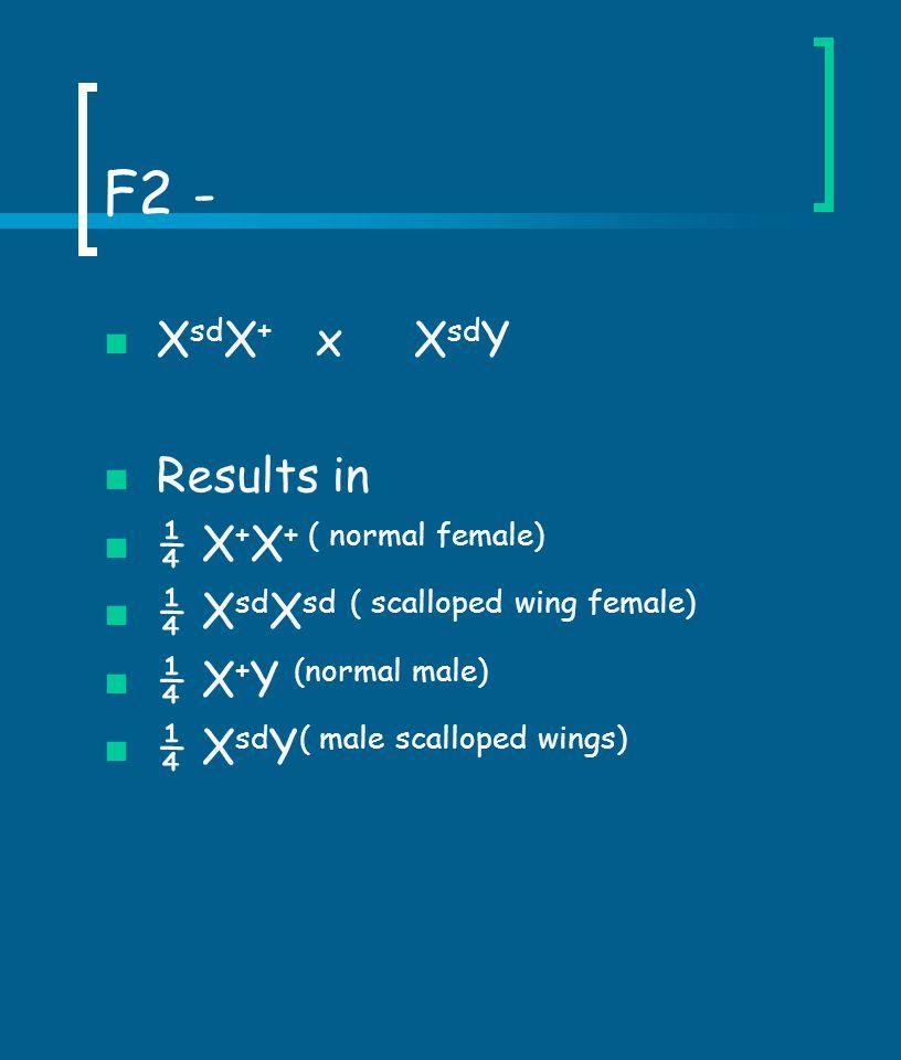 F2 - XsdX+ x XsdY Results in ¼ X+X+ ( normal female)