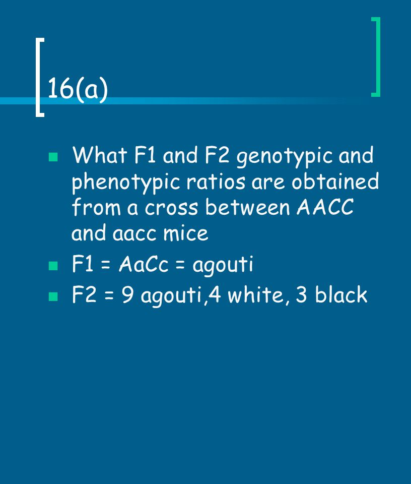 16(a) What F1 and F2 genotypic and phenotypic ratios are obtained from a cross between AACC and aacc mice.