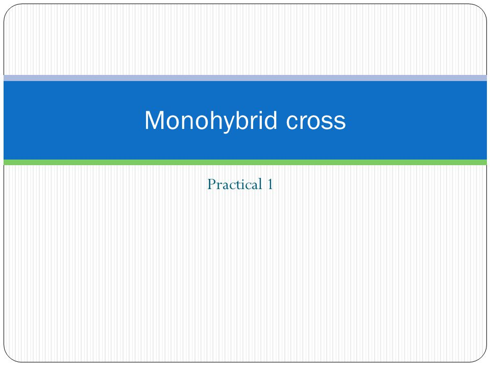 Monohybrid cross Practical 1