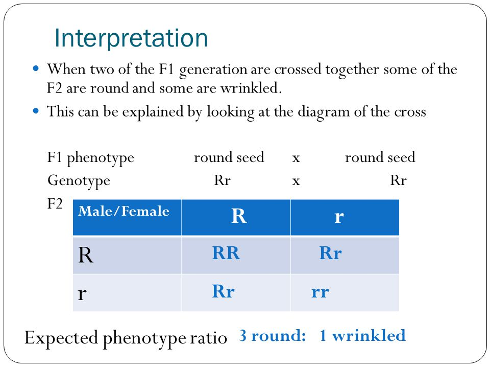 Interpretation R r RR Rr Rr rr Expected phenotype ratio 3 round: