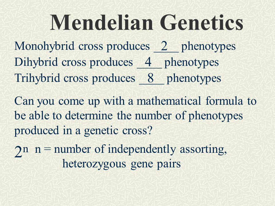 Monohybrid cross produces ____ phenotypes