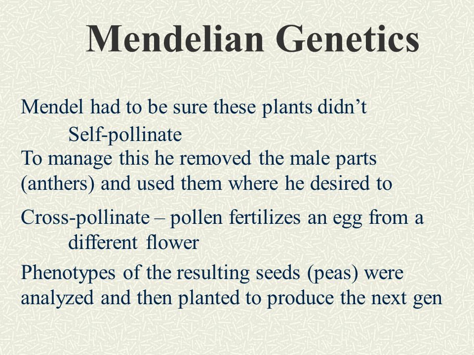 Mendelian Genetics Mendel had to be sure these plants didn't